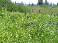 Lush meadow above Lamphier Lake