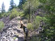 Leah and Draco cruising up the Waterdog Trail