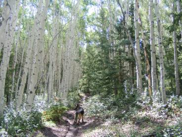 Leah on the Waterdog Trail, cruising through the montane aspen forest