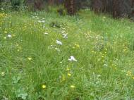 Wildflowers near Waterdog Lake