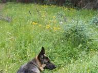 Leah near Waterdog Lake