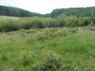 Draco near Park Creek along the Waterdog Trail