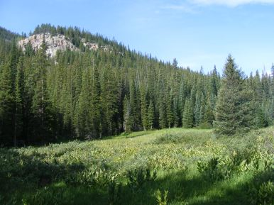 One of the upper meadows of the Lake Fork, in the Sawatch Range