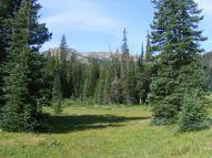 A meadow near Timberline Lake