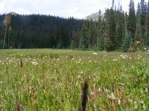 Flower strewn meadow near Timberline Lake