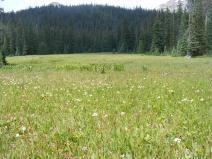 Verdant meadow below Timberline Lake