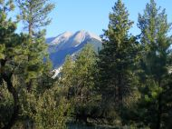 The Sawatch Range, peaking up over the lower elevation forest