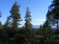 Looking east from my trailhead near the junction of San Isabel National Forest Roads 272 and 274