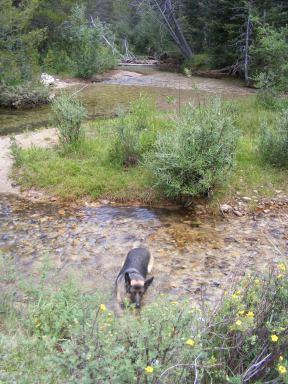 Leah in Brown's Creek