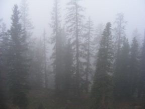 Forest atop the Continental Divide south of Monarch Pass, enshrouded in low clouds
