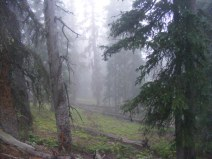 Damp forest near the Great Divide, south of Monarch Pass