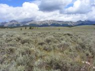 The Sawatch Range rising above the sagebrush steppe near Taylor Park