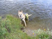 Draco with his dog panniers, in Texas Creek