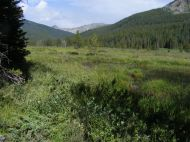 Small ponds adjacent to Texas Creek Trail No. 416