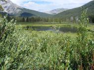 Pond on Texas Creek