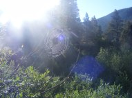 Dew drenched spider's web
