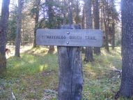 The Waterloo Gulch Trail at its beginning on the Texas Creek Trail