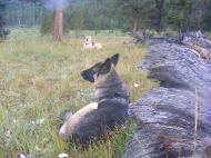 Leah and Draco resting in the meadow near camp on Texas Creek