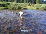 Draco crossing Texas Creek
