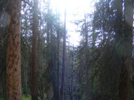 The forest along the Crest Trail