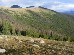 Along the Crest Trail, where the sub-alpine forest meets the alpine tundra