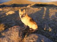 Draco on Mount Peck at sunset