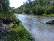 Draco on the bank of the Cimarron River at the East Cimarron Wayside