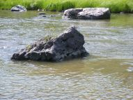 An island of sorts on the Cimarron River, at the East Cimarron wayside, managed by the Curecanti National Recreation Area
