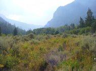 Abundant vegetation in the South Fork Canyon