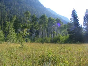 Meadow in South Fork Canyon