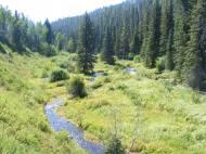 Verdure on Marvine Creek