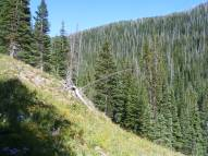 Near the headwaters of Marvine Creek
