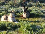 Draco and Leah warming up near Twin Lakes