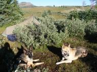 Big Marvine Peak beyond Leah and Draco at camp