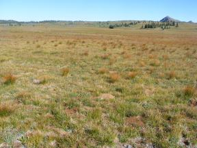 The tundra atop The Flat Tops, Little Marvine Peaks to the right