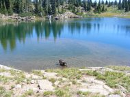 Leah cooling off in a small pond on The Flat Tops