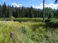 On East Marvine Creek, in the Flat Tops Wilderness