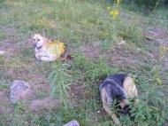 Draco and Leah rest near camp