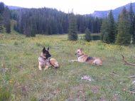 Leah and Draco near camp