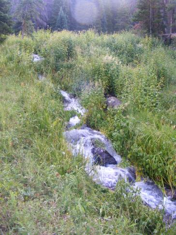 A small brook tributary to East Marvine Creek