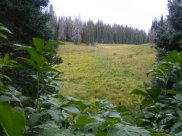 One of many small meadows on East Marvine Creek