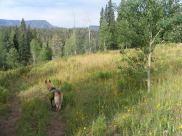 Draco on East Marvine Creek Trail No. 1822