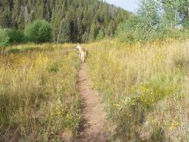 Trekking with Draco on the East Marvine Creek Trail No. 1822