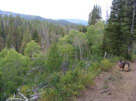 Leah on the East Marvine Creek Trail No. 1822