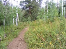 The East Marvine Creek Trail No. 1822 passes through some lush vegetation