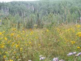 Last wildflowers of the season, on Ripple Creek