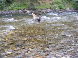 Draco and Leah wading across the Crystal River, near Avalanche Creek; within the White River National Forest