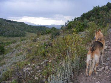Draco on the Drift Creek Trail No. 815, above Lee Creek