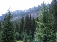Verdure rising up, along the East Fork Cimarron River