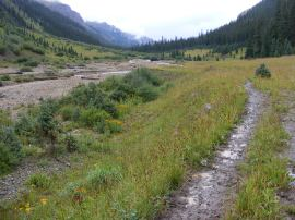 The East Fork No. 228 Trail in a sub-alpine wonderland